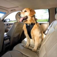 Auto Hundegeschirr Kurgo Tru Fit mit Golden Retriever